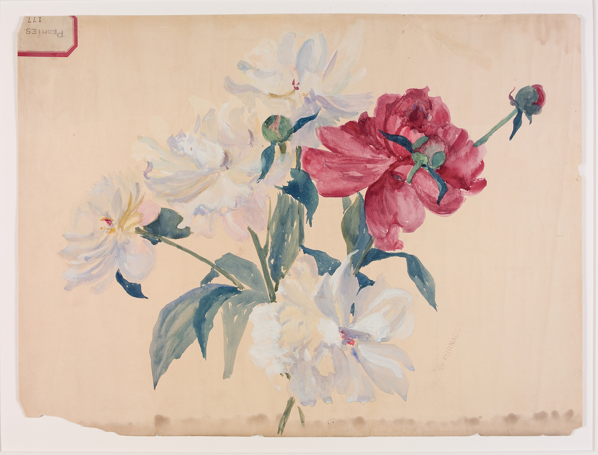 Peonies 177, Alice Gouvy or Lillian Palmié, Tiffany Furnaces, Corona, New York, about 1902. CMGL 89004.