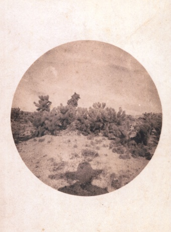 Figure 9. Cacti (Opuntia bigelovii) near Coyote Hills, Colorado desert, 1890. Rakow Research Library Bib ID 95862.